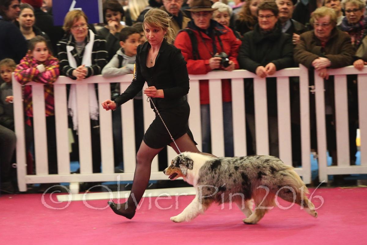 Expos de chiens de races au salon de l agriculture 2016 for Salon agriculture